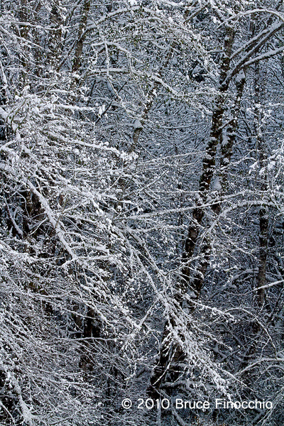 Snow and Tree Patterns_BA109566D7 by BruceFinocchio