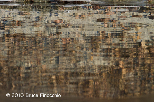 Tree Patterns In The River by BruceFinocchio