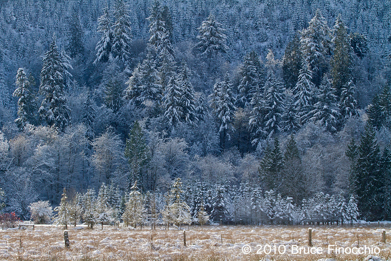Trees and Farmland Under A Blanket of Snow In The Skokomish Valley