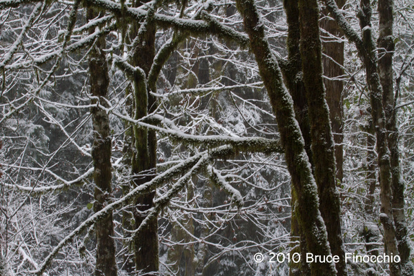 Washington State Tree Trunk Patterns by BruceFinocchio