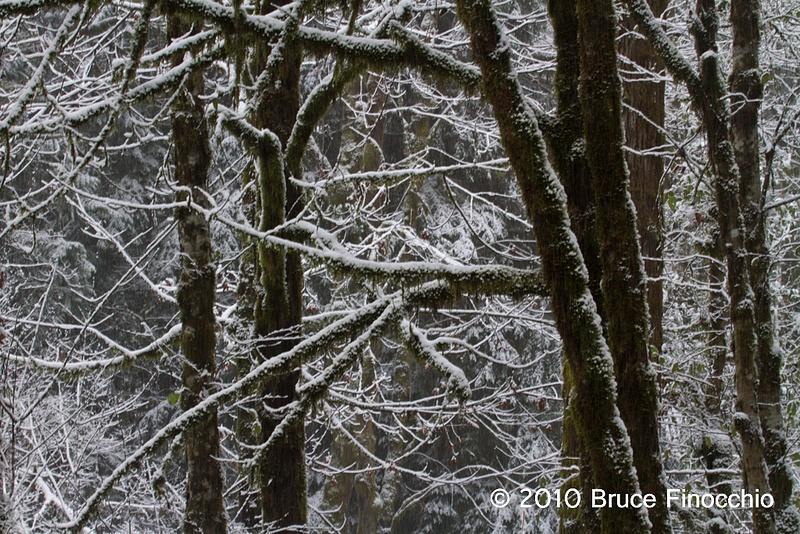 Washington State Tree Trunk Patterns