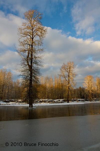 Winter Cottonwoods by BruceFinocchio