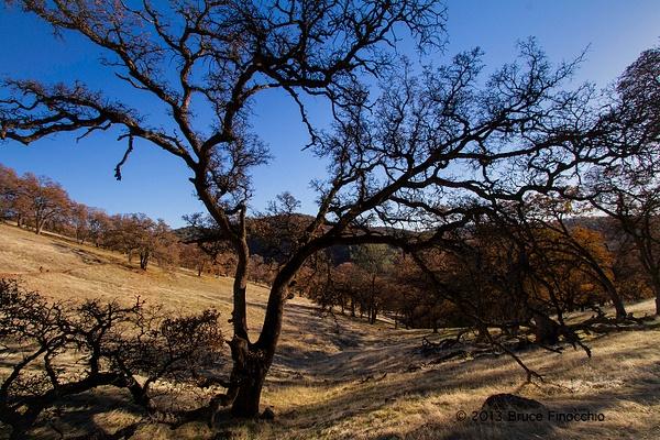 Sierra Foothills Frame By A Black Oak_BD146156D7c by BruceFinocchio
