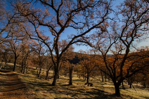 Trail Path Winding Through A Black Oak Forest