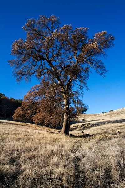 Dry Creek Black Oak by BruceFinocchio