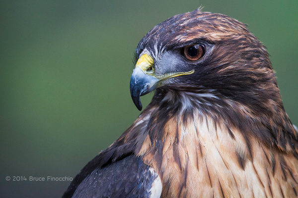 Fearst Yet Contemplative by BruceFinocchio