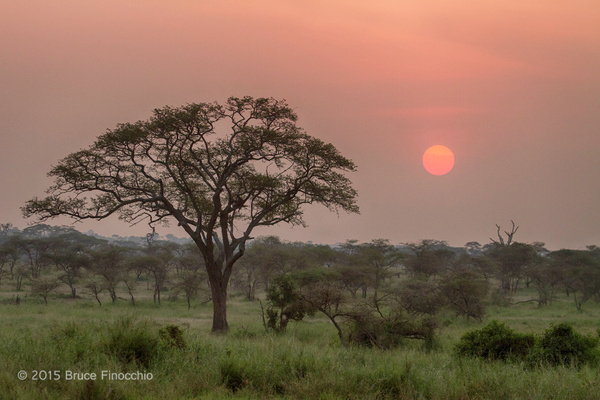 Serengeti Sunrise by BruceFinocchio