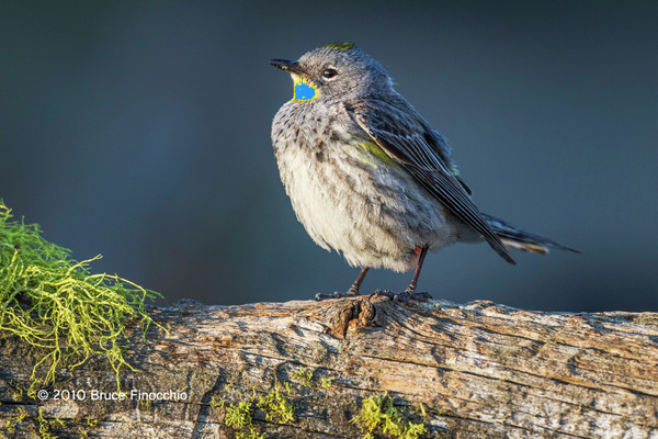 Birds of Southern Oregon by BruceFinocchio