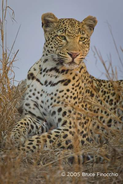 Maxabene Rests and Watches From A Termite Mound