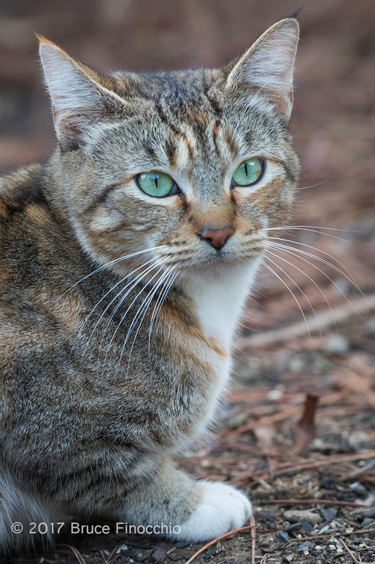 Green Eyed Lady