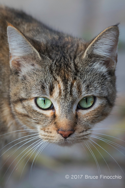 The Cat With The Green Eyes by BruceFinocchio