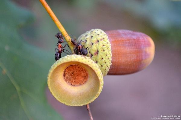 Big ants by globolife