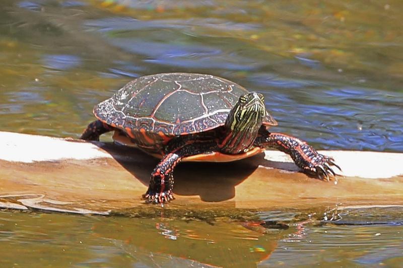 turtle lake 1