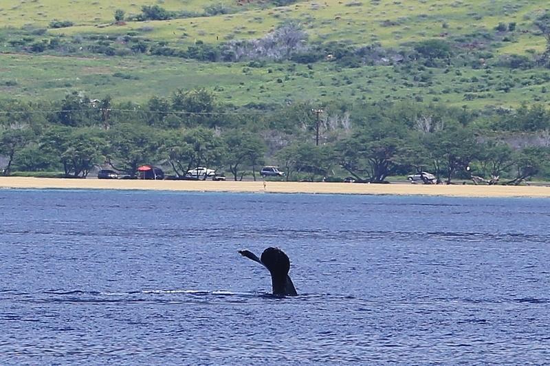 Hawaii (8)