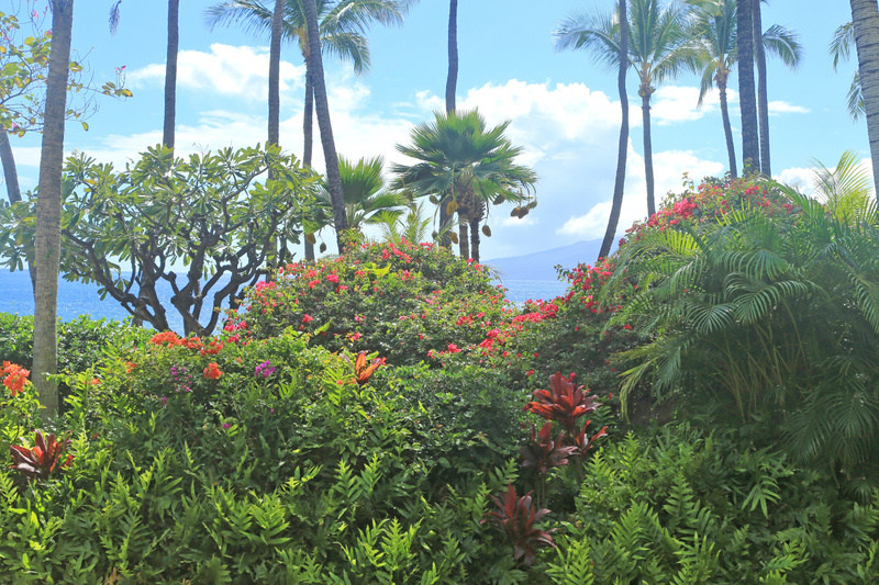 Hawaii Maui (7)