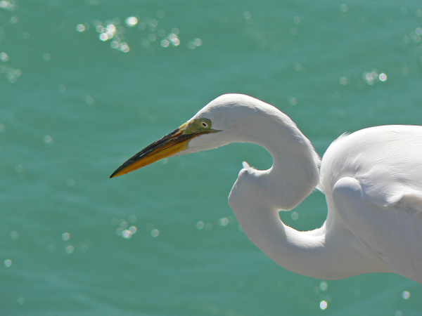 Florida (4) by Gary Acaley