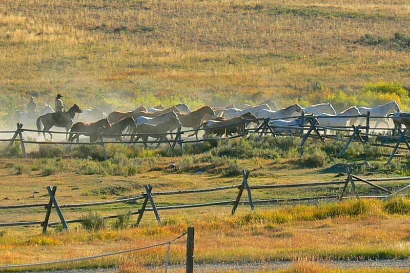 Montana (2)