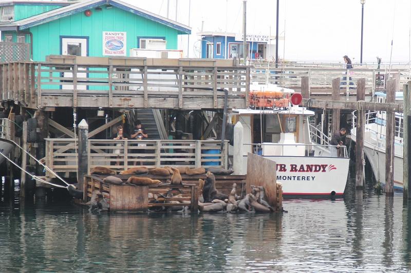 Monterey CA (2)