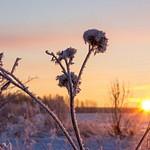 Frozen Morning. 2013