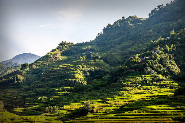 Rice_Terraces_01 by alienscream