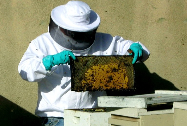Orange County Bee Removal by OrangecountyBeeremoval