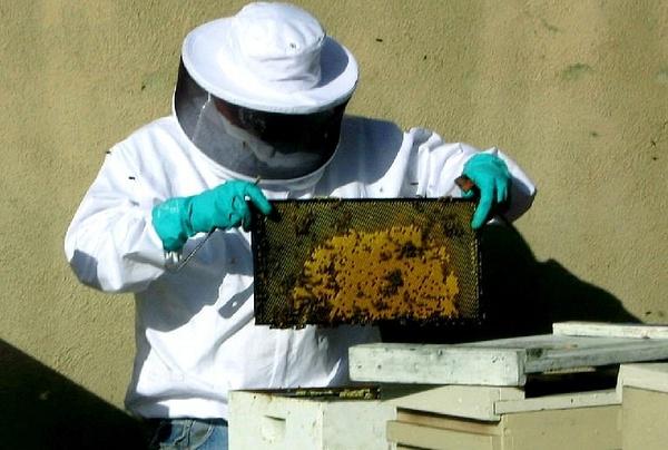 Los Angeles Bee Removal Service by OrangecountyBeeremoval