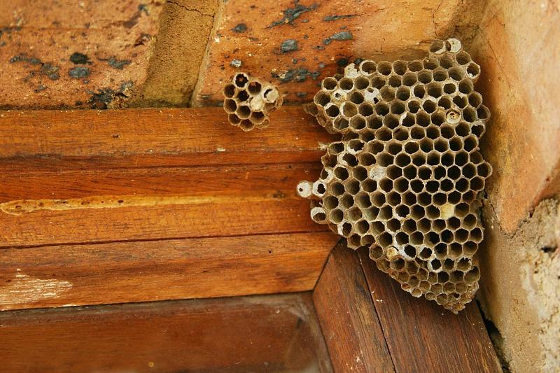 Wasp-extermination