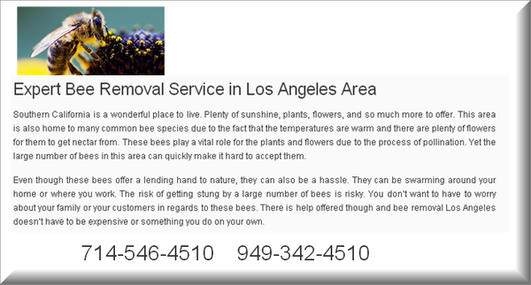 Los Angeles Bee Removal Service by OrangecountyBeeremoval
