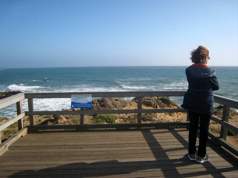 Kitty in wind lookiing at ocean