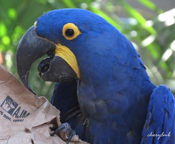 Macaw by CherylsShots