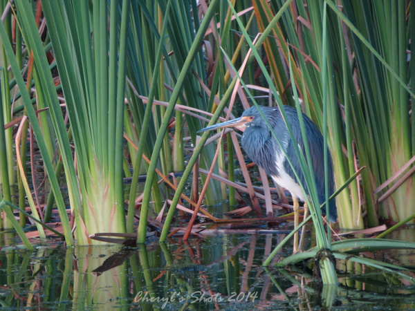 IMG_6891_heron by CherylsShots