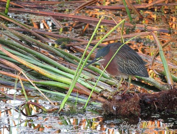 Viera wetlands by CherylsShots