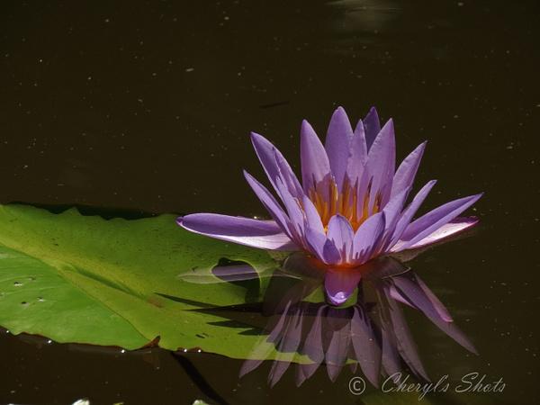 McKee Garden 6-29-17 by CherylsShots by CherylsShots