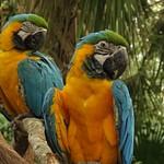 Brevard Zoo, Melbourne FL 10-7-17