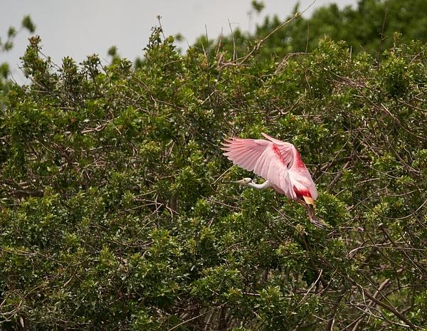Stick Marsh - Fellsmere FL 4-25-21 by CherylsShots by...