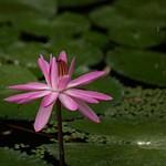 McKee Botanical Gardens Vero Beach FL 5-11-21