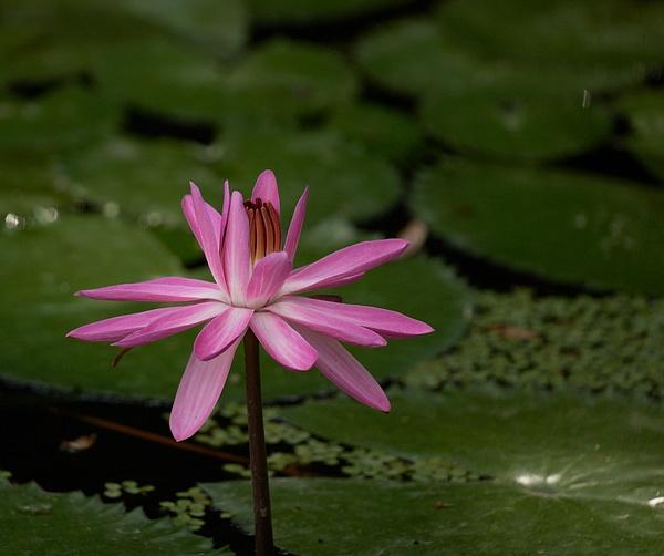 McKee Botanical Gardens Vero Beach FL 5-11-21 by...