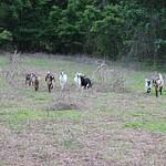 06-2013 Tiny Acre Farm