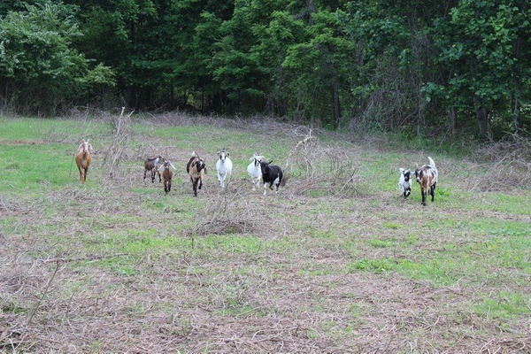 06-2013 Tiny Acre Farm by snicarry
