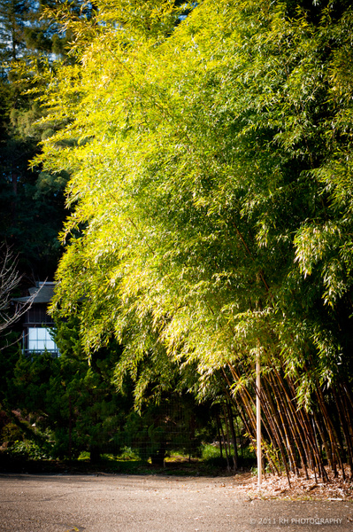 Hakone Garden 2011 by Matt H