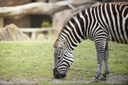 SF Zoo 2012