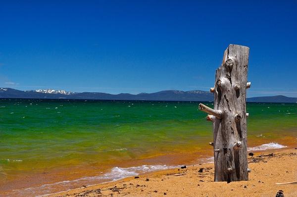 South_Lake_Tahoe_Stump_002 by ArtCooler