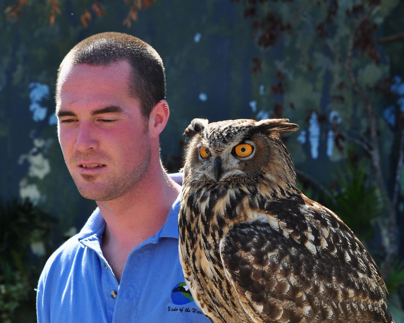 Handler_and_Owl
