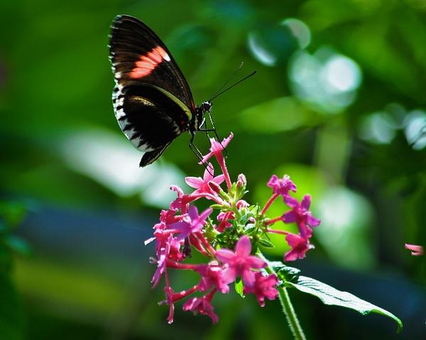 Butterfly_Feeding by ArtCooler