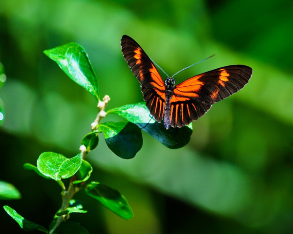 Butterfly_on_Small_Leaf by ArtCooler