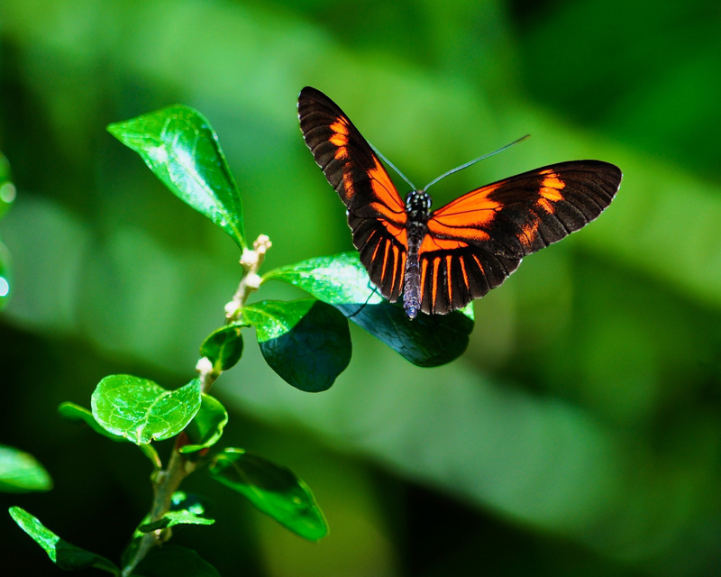 Butterfly_on_Small_Leaf