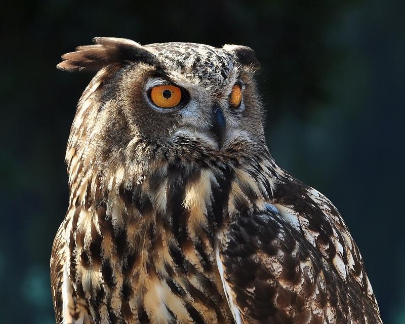 State_Fair_Owl