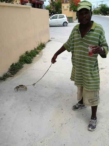 Walk-the-crab