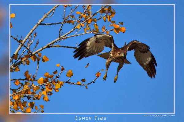 Lunch_Time
