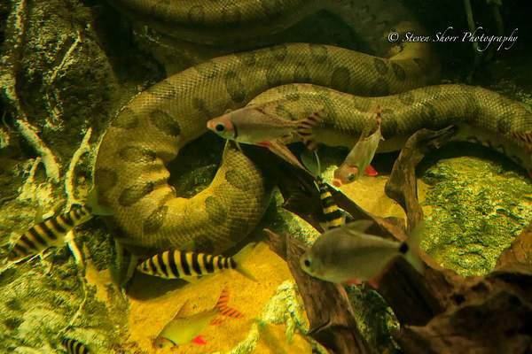 Amazon River Life